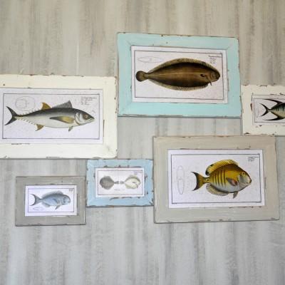 slike-ribe-2